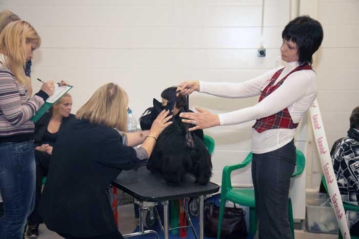 09.11.2010 г. выставка собак в Санкт Петербурге, клуба Кредо